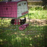 Le filet à poules Omlet pour garder nos poulettes chez elles
